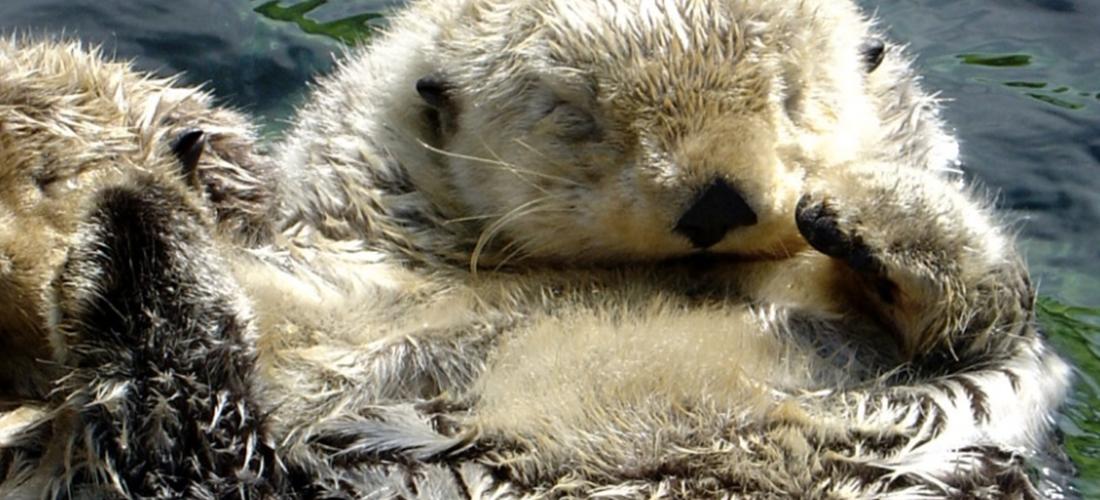 Fun Fact Friday: Otter-ly Adorable