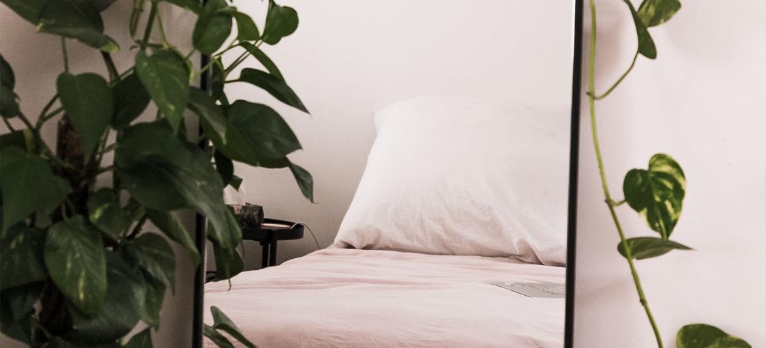 6 bedroom plants that will help you sleep I Soak&Sleep
