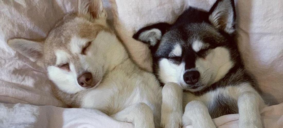 Sleep benefits of dogs I Soak&Sleep