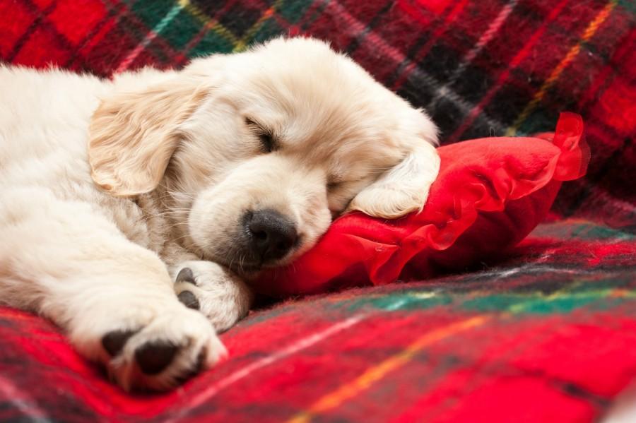 Just Take Forty Winks | Soak&Sleep