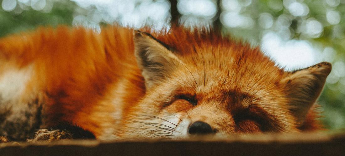 5 Sleepiest Animals in the World