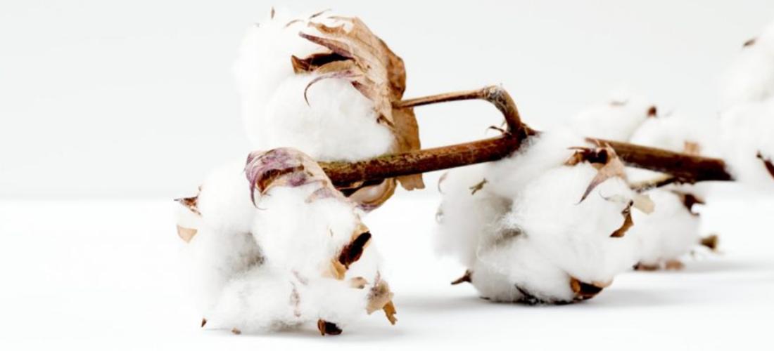 Why buy Soak&Sleep's Egyptian Cotton bedding and towels? | Soak&Sleep