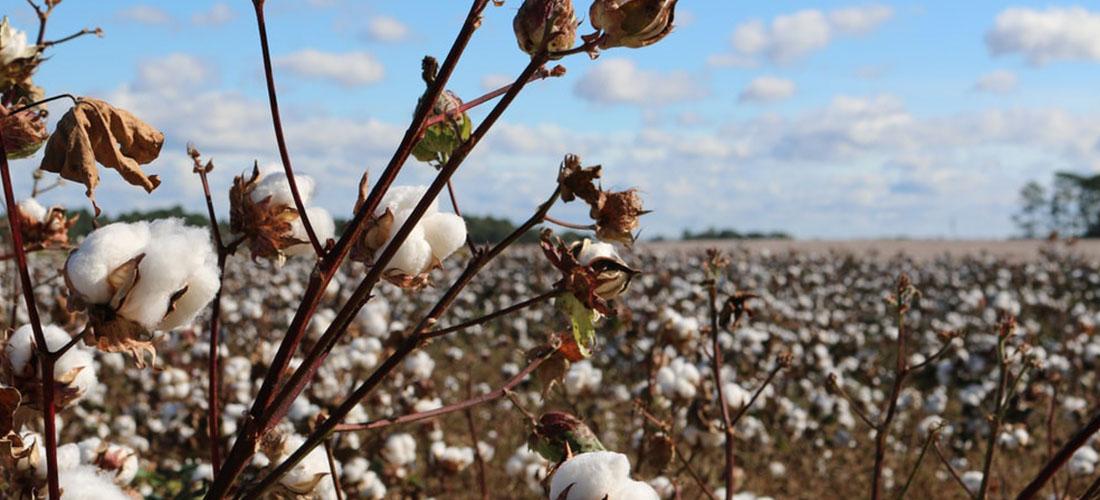 Egyptian cotton vs regular cotton