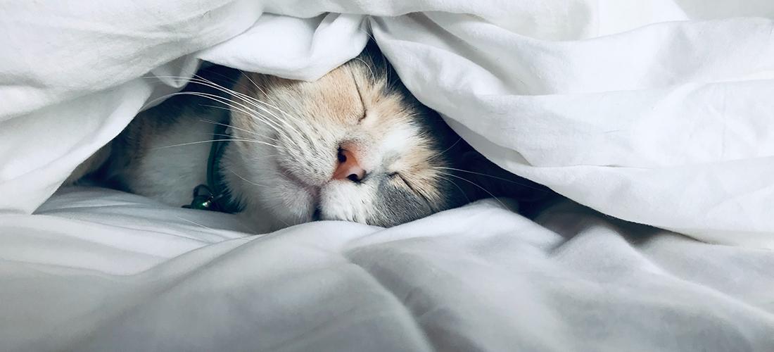 cat-comforter